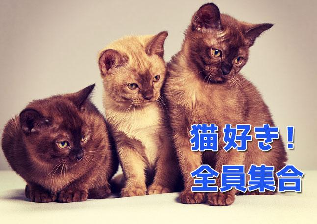 渋谷猫たち猪熊弦一郎展